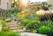 Water Wise Garden Ideas and Design