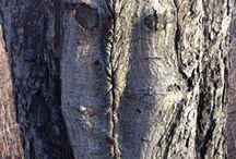 tree / mask