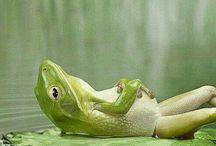 релакс   relax