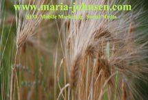 Agriculture Marketing / Agriculture Marketing