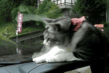 Cats !!!!