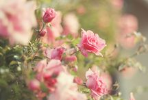 FLORAL INSPIRE / by SweetBliss Jenny