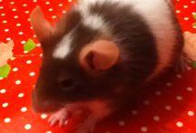 Mijn muis pipi