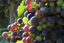 Grape Wines and Blueberres Farmer