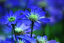 Motives of nature / Tiere, Blumen, Pilze u. a. Gewächse. Außerdem Sonne, Mond und Sterne, Naturphanomene etc.
