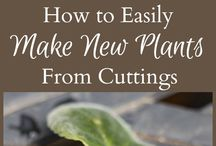 plant cuttings