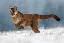 Puma / Mi piace perchè corre veloce