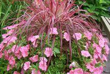 λουλούδια-φυτά