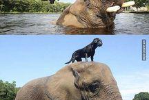 Hund och andra djur / Om hundar och andra djur