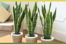 The crazy plant ladys plants