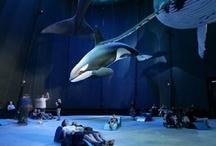 Aquariums interiors