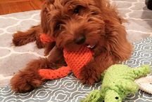 Four Legged Fans / We love seeing images of doggies with our toys and bedding! #jaxandbones