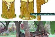TREES / pruning, grafting, cuttings,