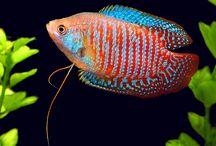 Southeast Asia fish