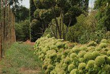 Hydrangea / La nostra collezione. Our collection