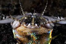 Marine Life / All the beauty of the depht