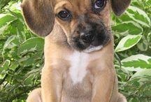 Puppies are friends  / by Brandi Nichols