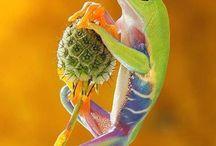 Nature....Amphibians