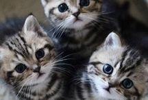 Cuki cicák♥ / Mi barátok vagyunk. Lina & ZéHá .Most létre hozztunk egy táblát, amit közösen fogunk használni. Mert imádjuk a kiscicákat :) Hiszen cica a profilunk is