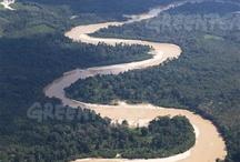 tRavel - Indonesia - Kalimantan - Central Kalimantan