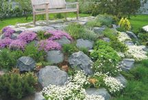rock gardens / by Trish Young