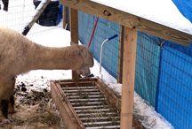Alpaca feeder