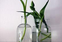 ...do bytu vázu,do vázy květinu....