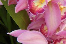 Flowers - Орхидеи