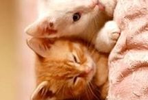 Baby animals / So cute