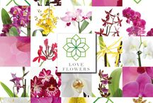 Love Flowers - Love Orchids