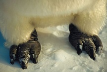 PenguinFeats