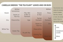 Tea Facts & Tips / by The Daily Tea