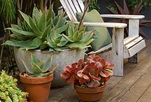 SUCCULENTS / by Michele Littell