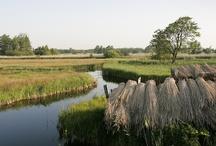 WaterReijk Weerribben Wieden