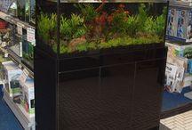 Aquascaped Planted Display Aquarium / Aquascaped and Planted display tank at Wharf Aquatics