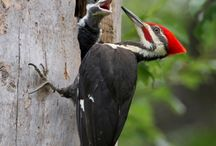 Filhotes - aves