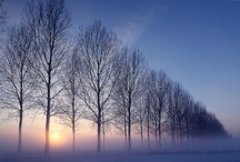 Winter / by Đanıeℓℓe L.