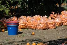 Orange festival Mili Samos
