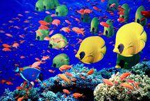 Nature - Underwater Drama