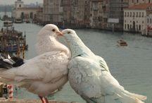 Venezia in love