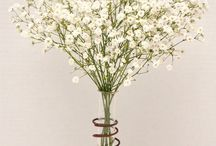 FLOWER : Gypsophila