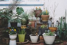 Grow | Succulents and Cacti