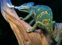 Reptiles Theme
