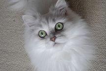 des chatons trop minion!!