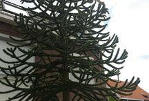 Tree / all kind of it