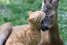 laska k zvieratam