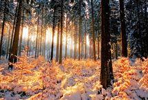 Décors nature hiver & pôles