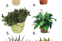 advantageous plants