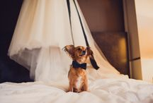 I DO love this / All wedding related photos that I LOVE