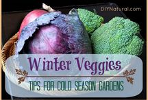 "Winter Gardening & Decor / Just because it's winter doesn't mean you need to stop gardening! On this board you'll find cold-weather gardening advice, indoor gardening tips & inspiration, PLUS pretty ""green"" winter home decor ideas!"
